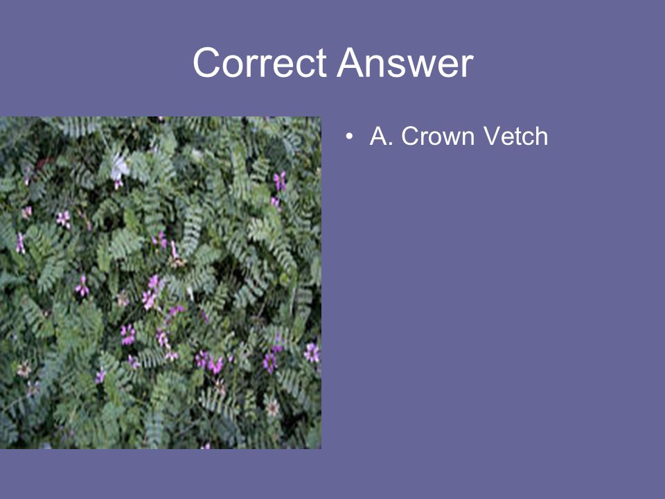Correct Answer A. Crown Vetch