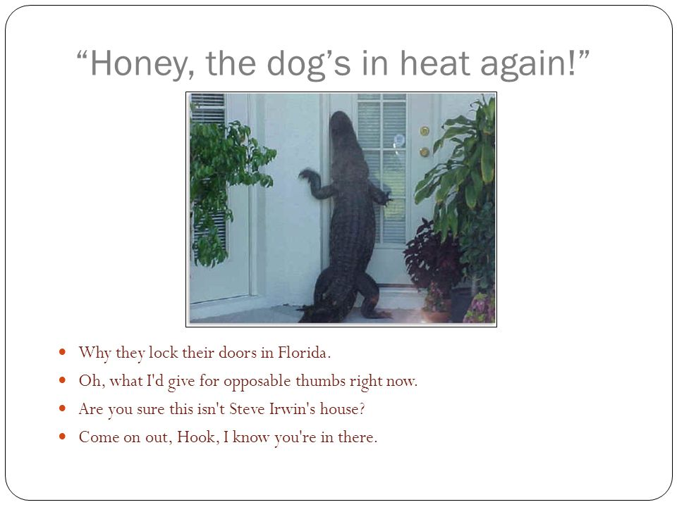 Honey, the dog's in heat again!