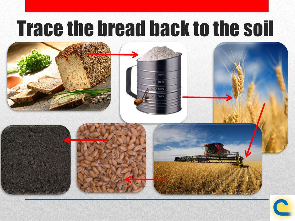 Trace the bread back to the soil