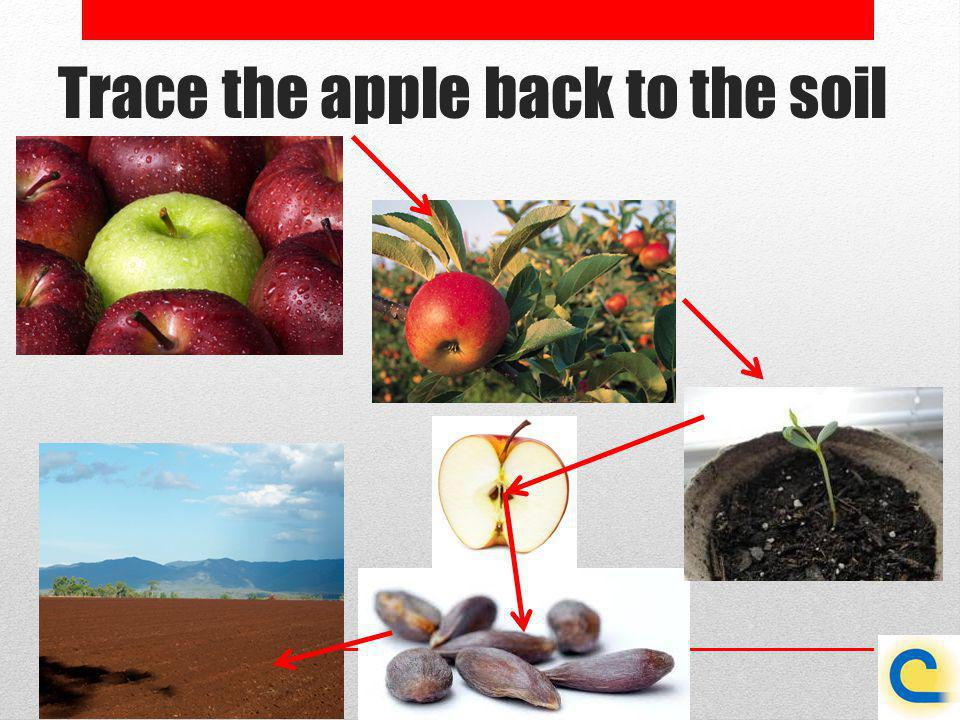 Trace the apple back to the soil