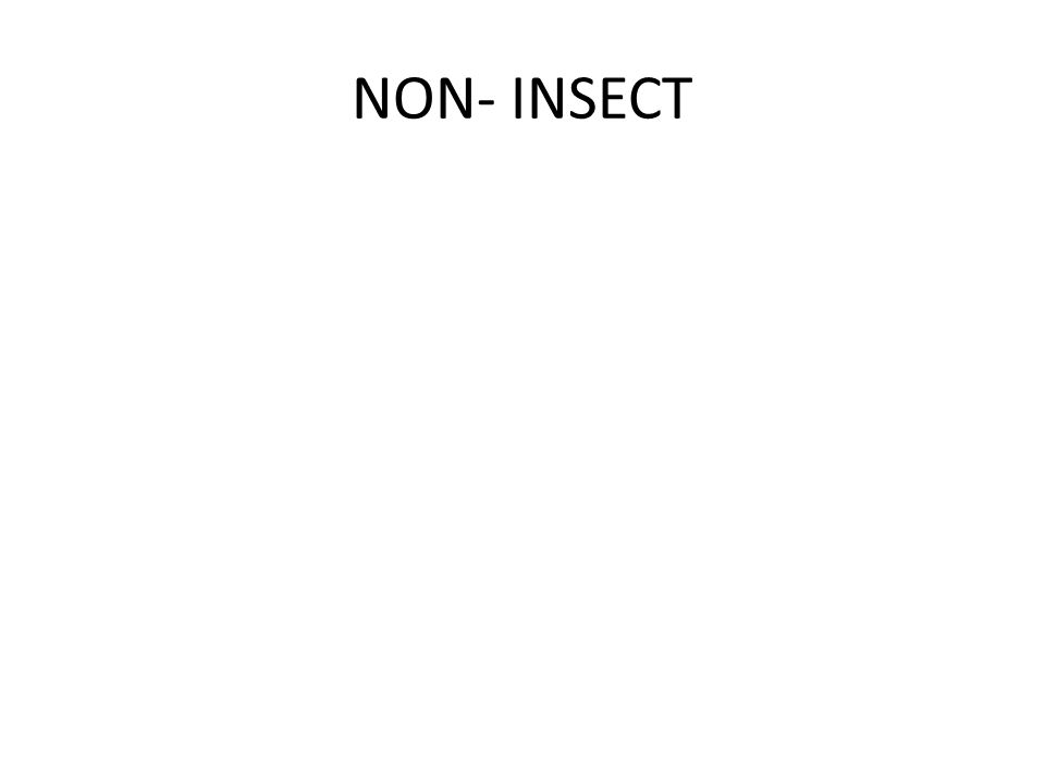 NON- INSECT