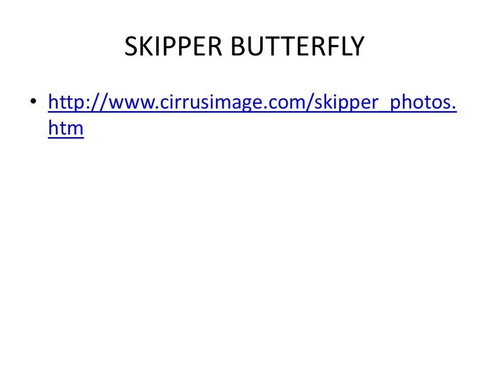 SKIPPER BUTTERFLY http://www.cirrusimage.com/skipper_photos.htm