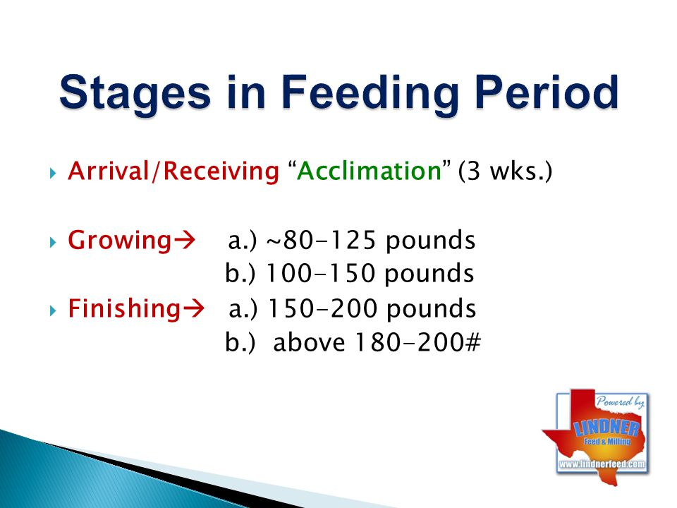 Stages in Feeding Period