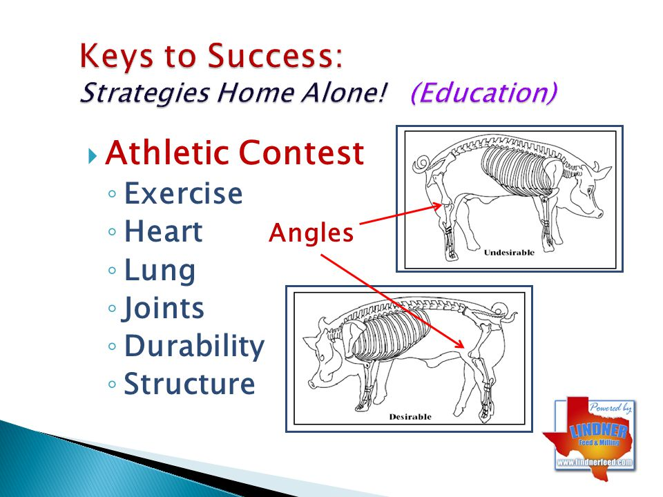 Keys to Success: Strategies Home Alone! (Education)