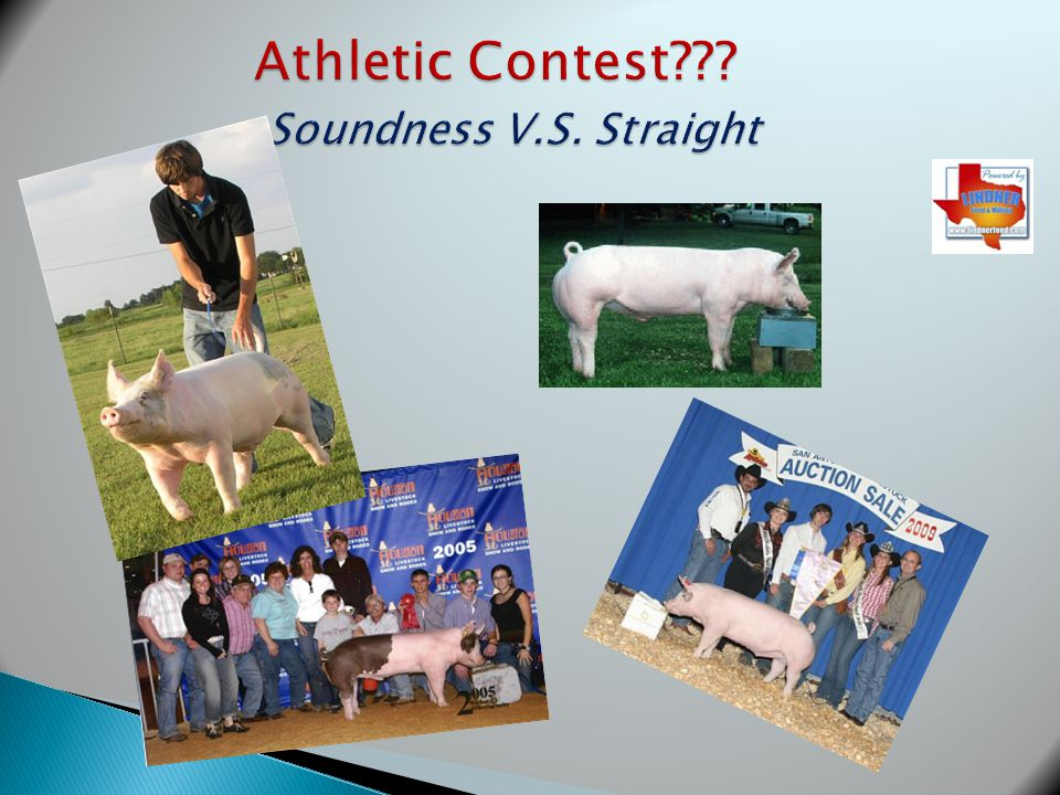 Athletic Contest Soundness V.S. Straight