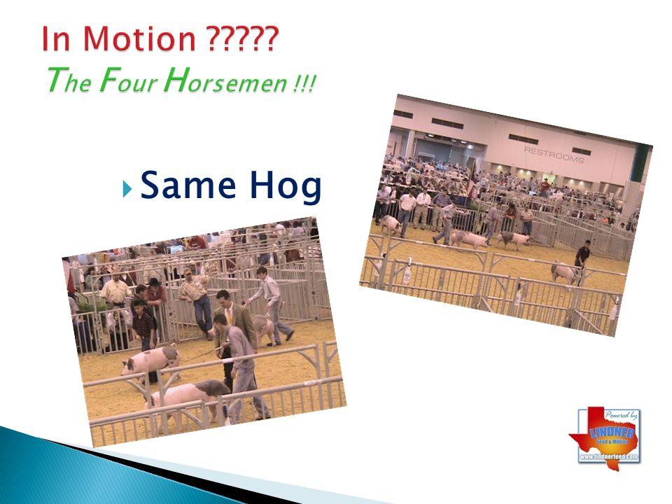 In Motion The Four Horsemen !!!