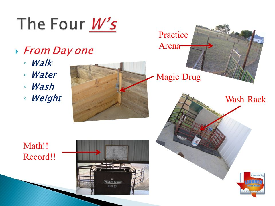 The Four W's From Day one Practice Arena Magic Drug Wash Rack Math!!