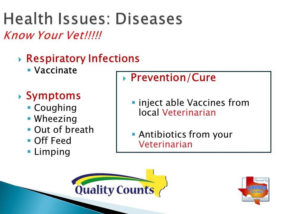 Health Issues: Diseases Know Your Vet!!!!!