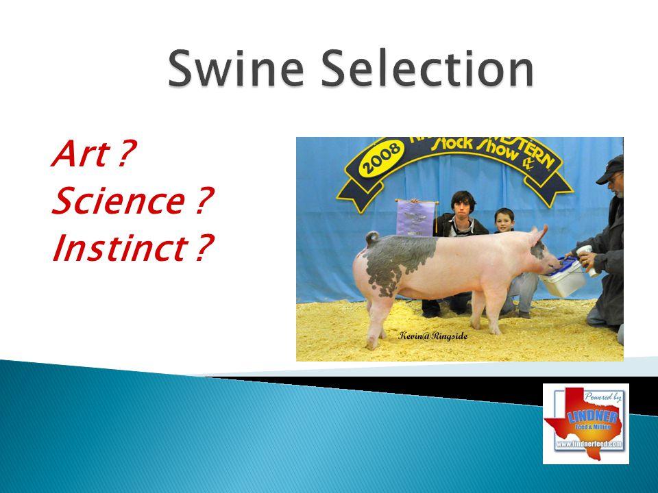 Swine Selection Art Science Instinct