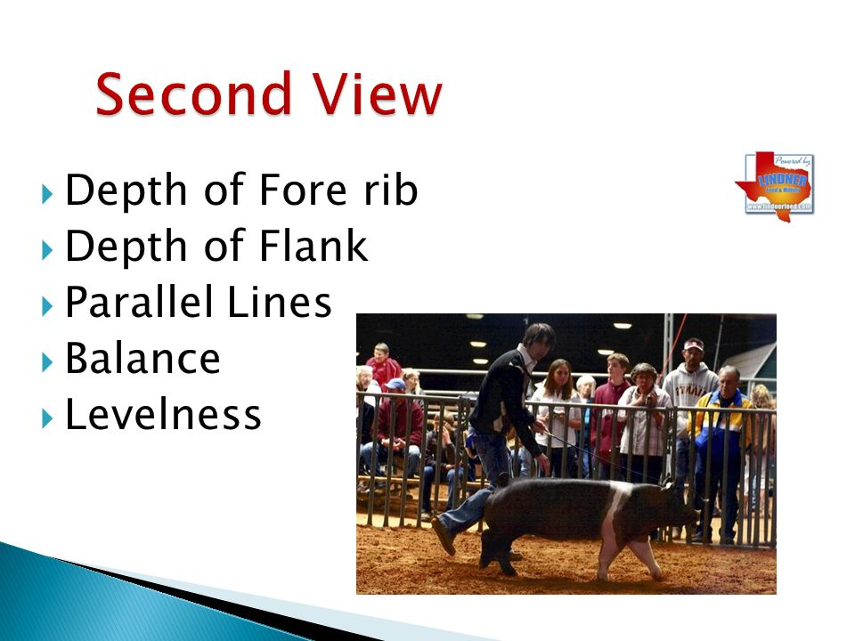 Depth of Fore rib Depth of Flank Parallel Lines Balance Levelness