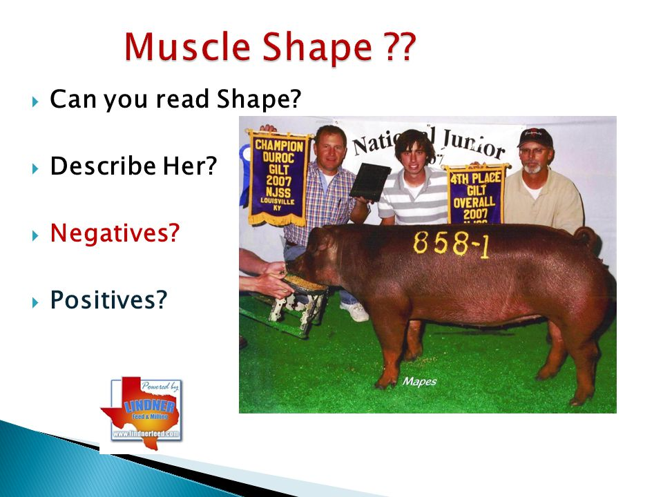 Muscle Shape Can you read Shape Describe Her Negatives