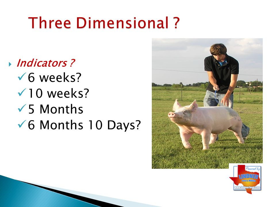Three Dimensional 6 weeks 10 weeks 5 Months 6 Months 10 Days