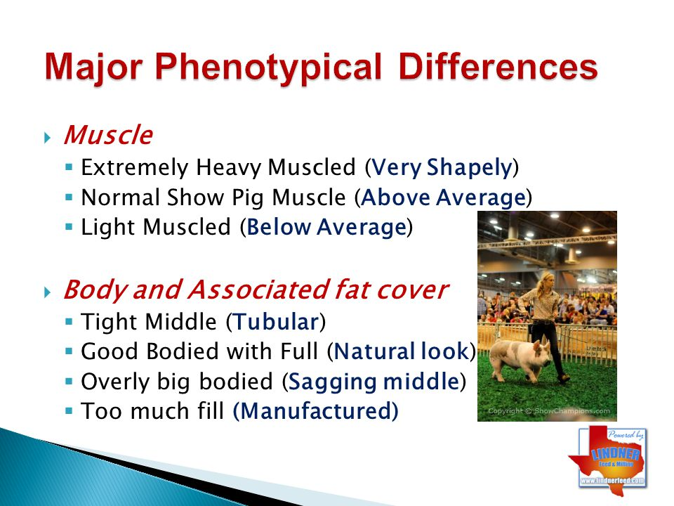 Major Phenotypical Differences