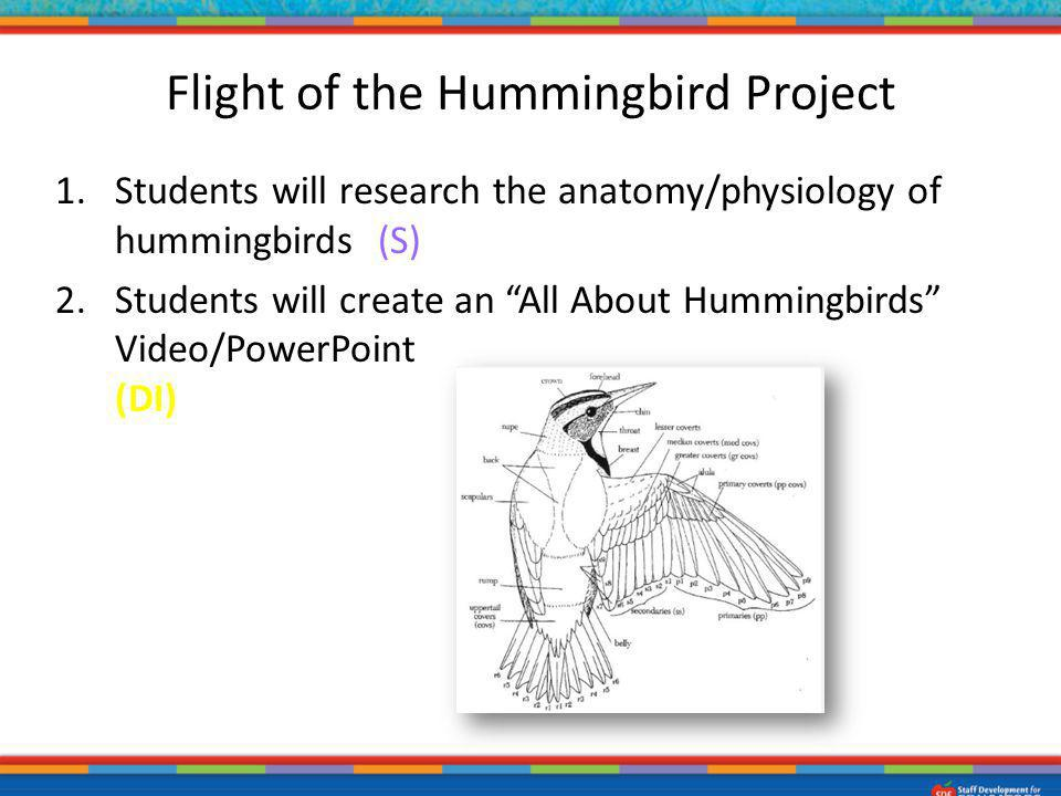 Flight of the Hummingbird Project