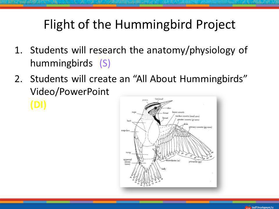 Flight of the Hummingbird Project