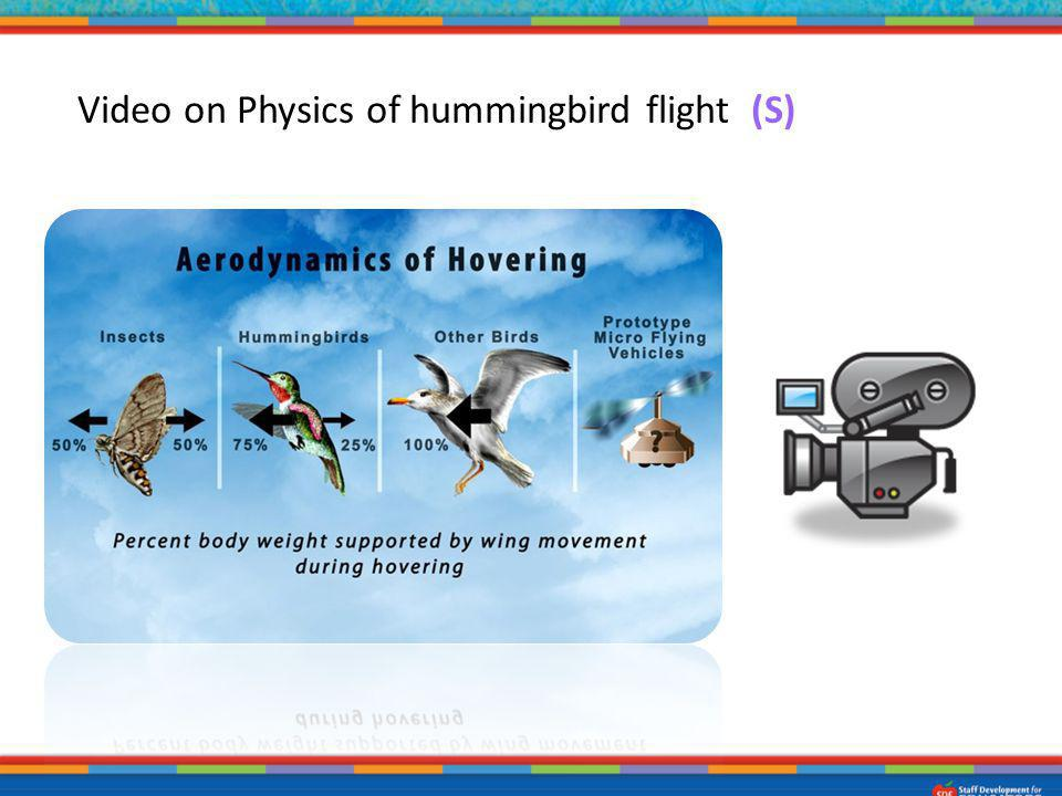 3. Video on Physics of hummingbird flight. (S)