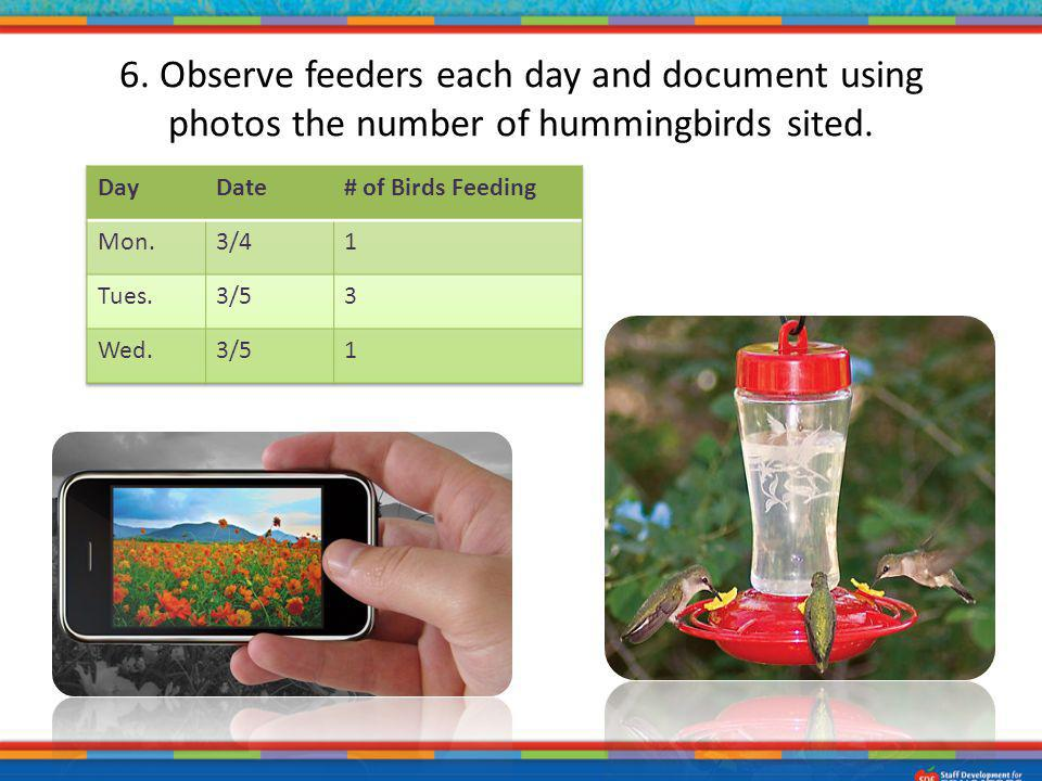 6. Observe feeders each day and document using photos the number of hummingbirds sited.