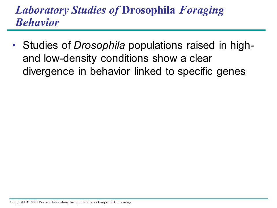 Laboratory Studies of Drosophila Foraging Behavior