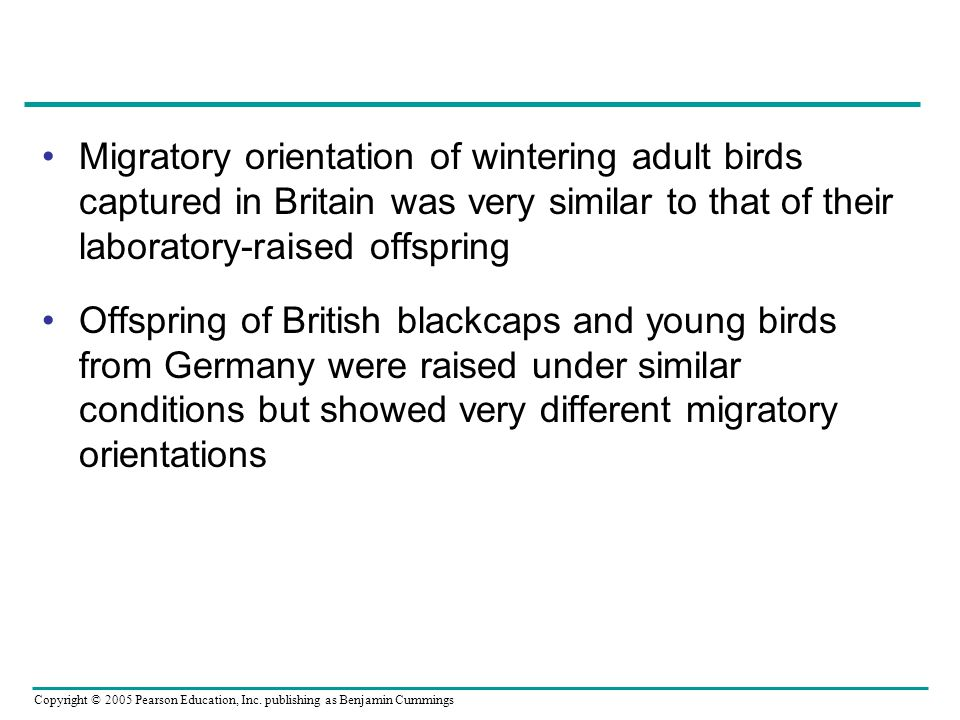Migratory orientation of wintering adult birds captured in Britain was very similar to that of their laboratory-raised offspring