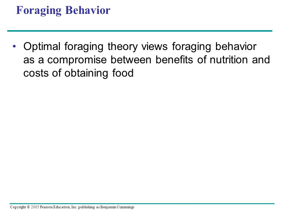 Foraging Behavior Optimal foraging theory views foraging behavior as a compromise between benefits of nutrition and costs of obtaining food.