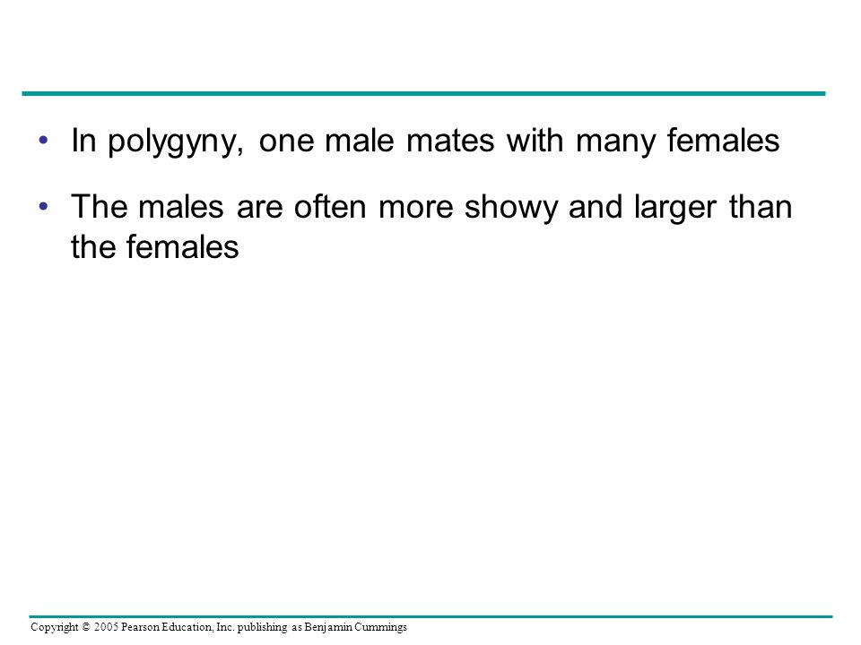 In polygyny, one male mates with many females