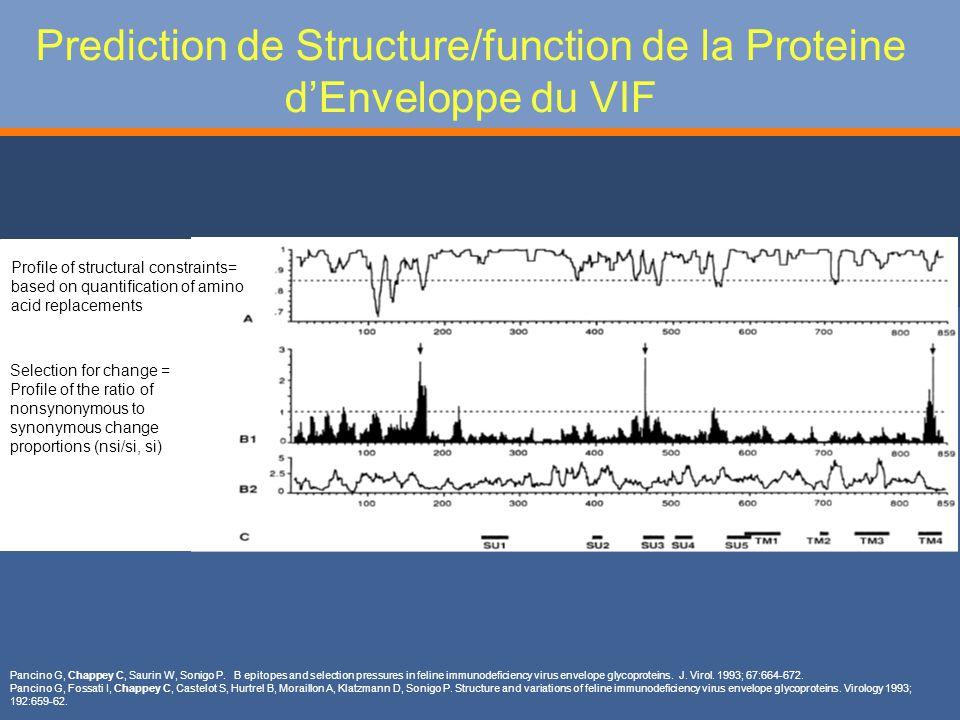 Prediction de Structure/function de la Proteine d'Enveloppe du VIF