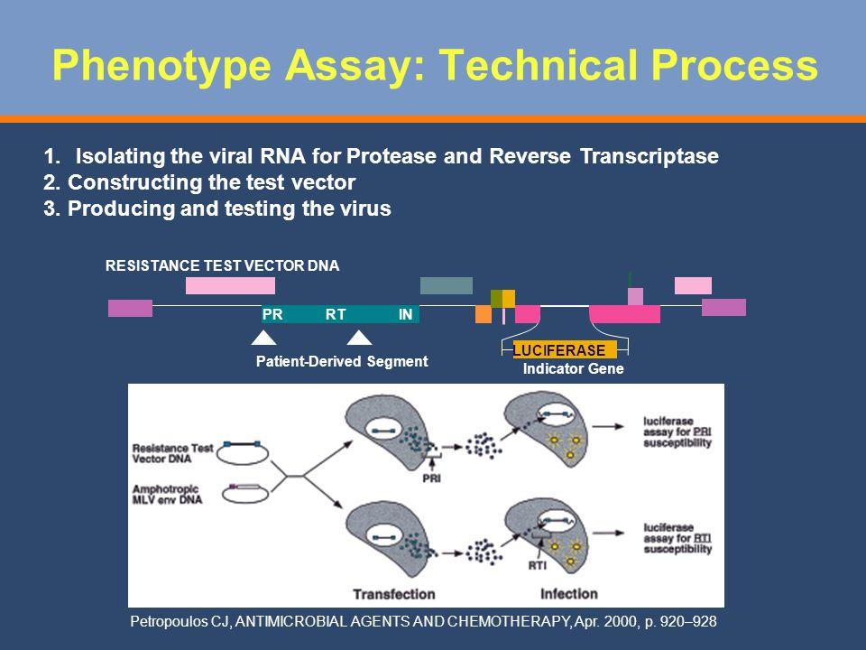 Phenotype Assay: Technical Process
