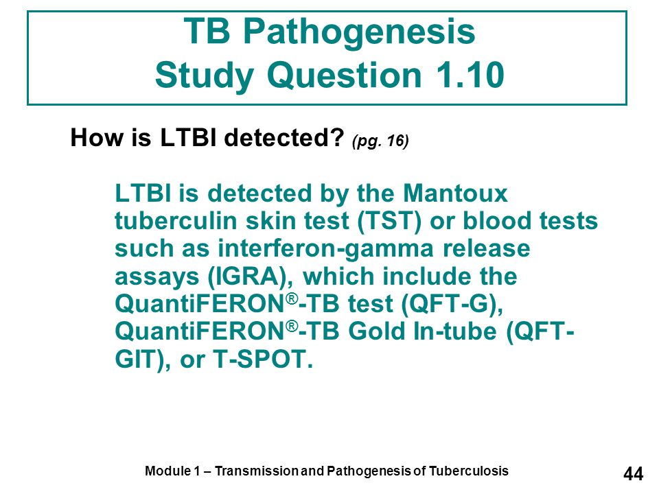 TB Pathogenesis Study Question 1.10