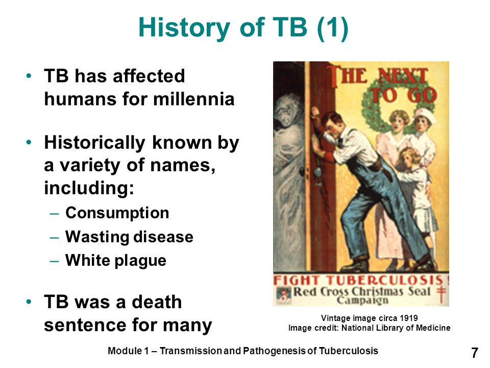 History of TB (1) TB has affected humans for millennia