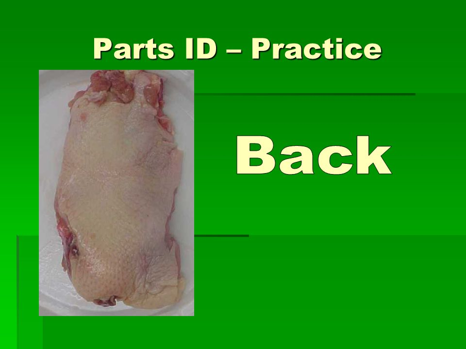 Parts ID – Practice Back