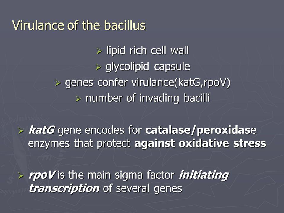 Virulance of the bacillus