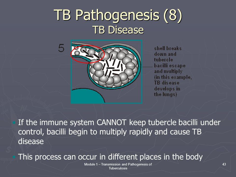 TB Pathogenesis (8) TB Disease