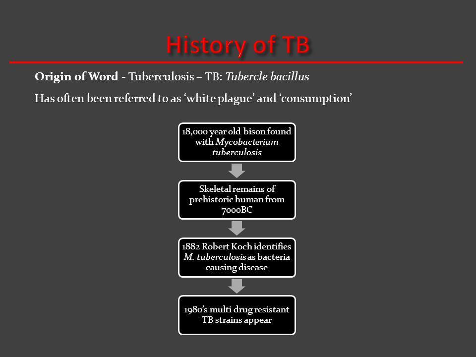 History of TB Origin of Word - Tuberculosis – TB: Tubercle bacillus