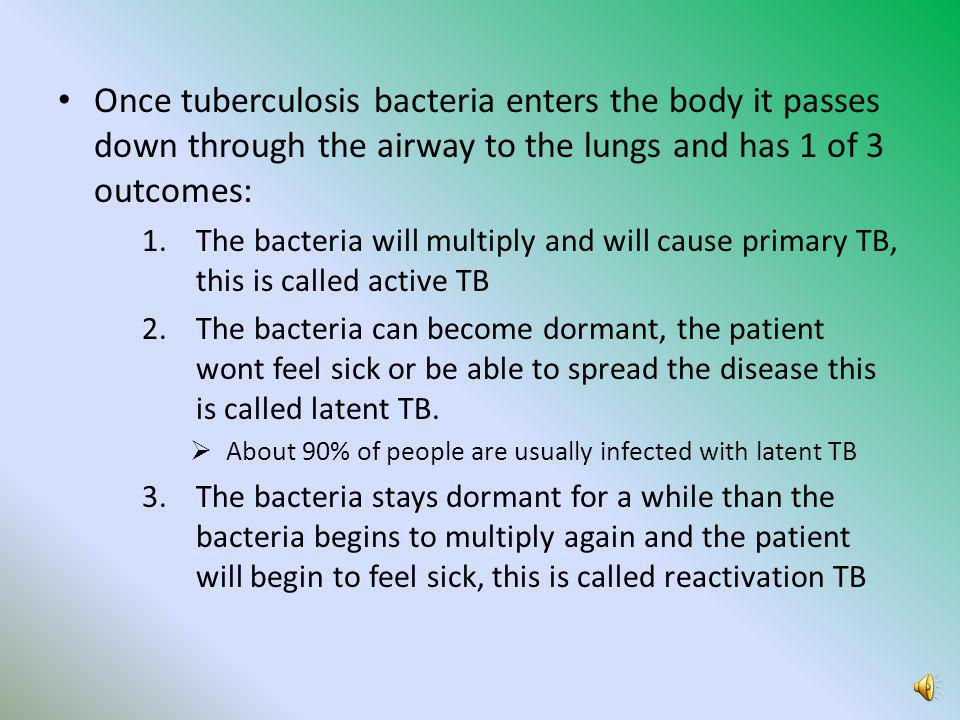 Once tuberculosis bacteria enters the body it passes down through the airway to the lungs and has 1 of 3 outcomes: