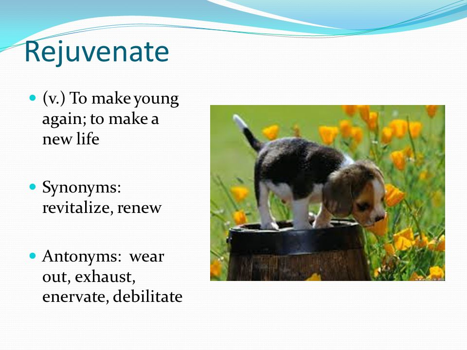 Rejuvenate (v.) To make young again; to make a new life