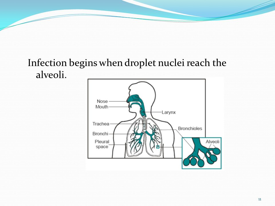 Infection begins when droplet nuclei reach the alveoli.