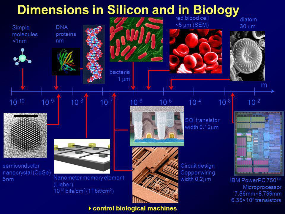 Dimensions in Silicon and in Biology