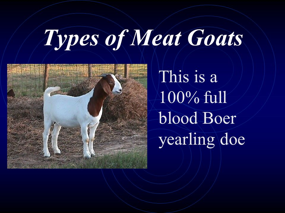 Types of Meat Goats This is a 100% full blood Boer yearling doe