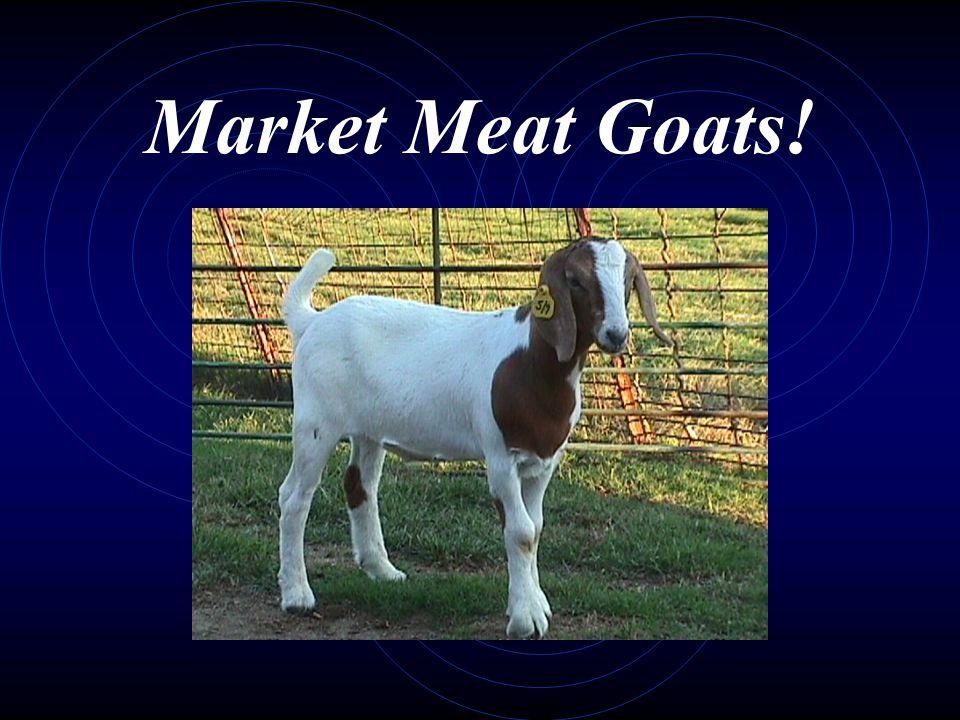 Market Meat Goats!