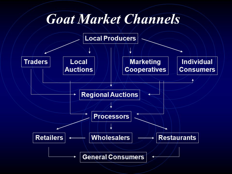 Goat Market Channels Regional Auctions Local Auctions Individual