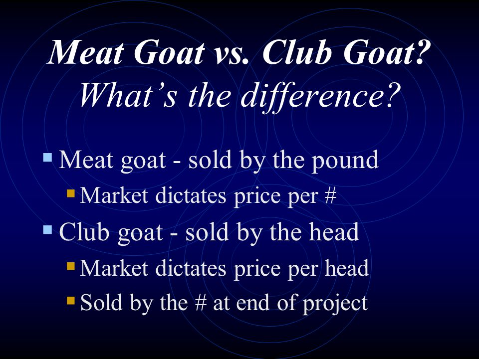 Meat Goat vs. Club Goat What's the difference
