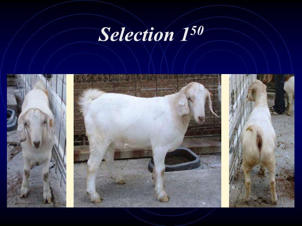 Selection 150