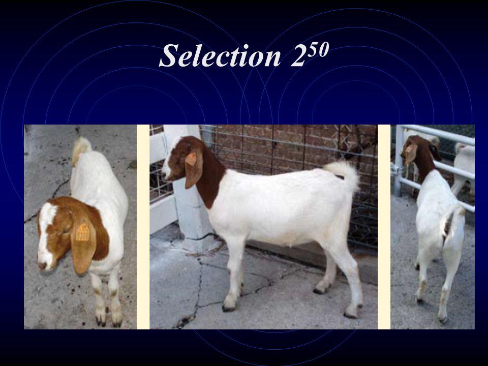 Selection 250