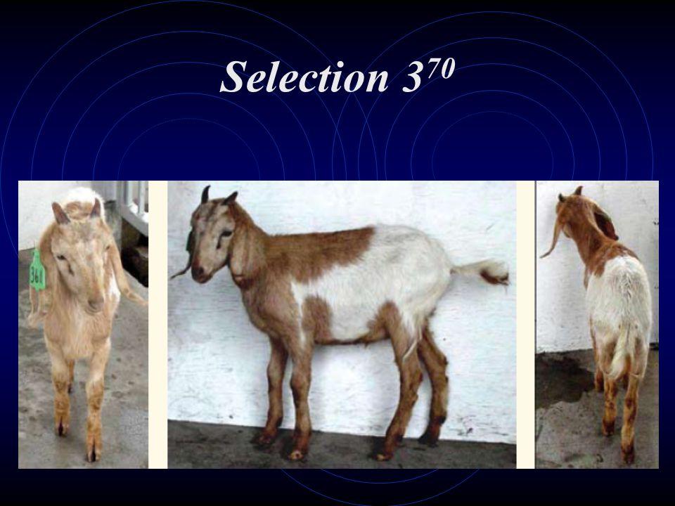 Selection 370