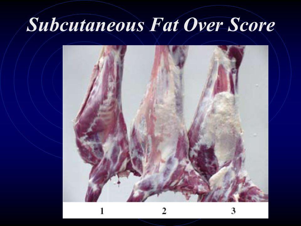 Subcutaneous Fat Over Score