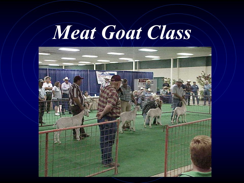 Meat Goat Class