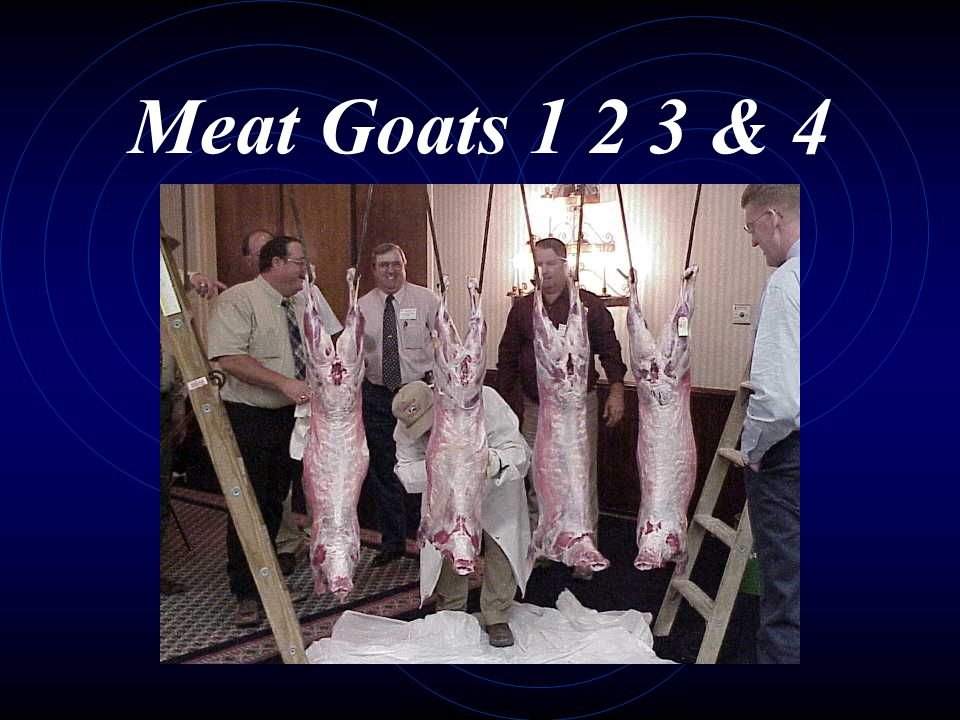 Meat Goats 1 2 3 & 4