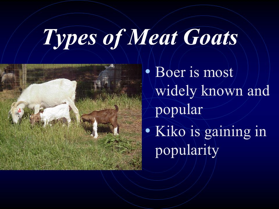 Types of Meat Goats Boer is most widely known and popular