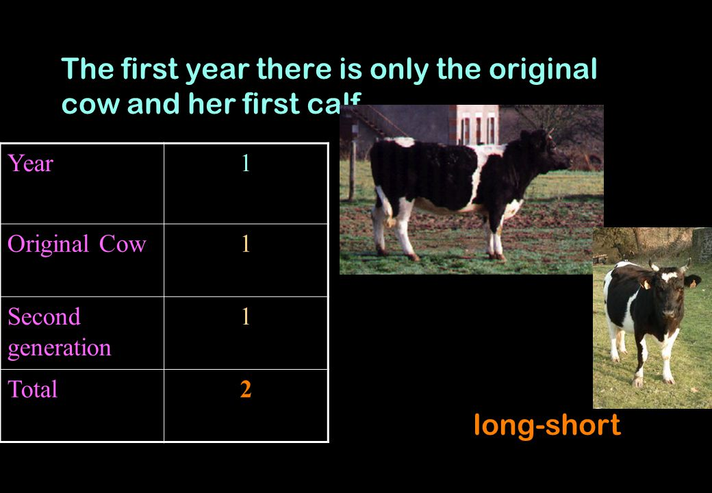 The first year there is only the original cow and her first calf.