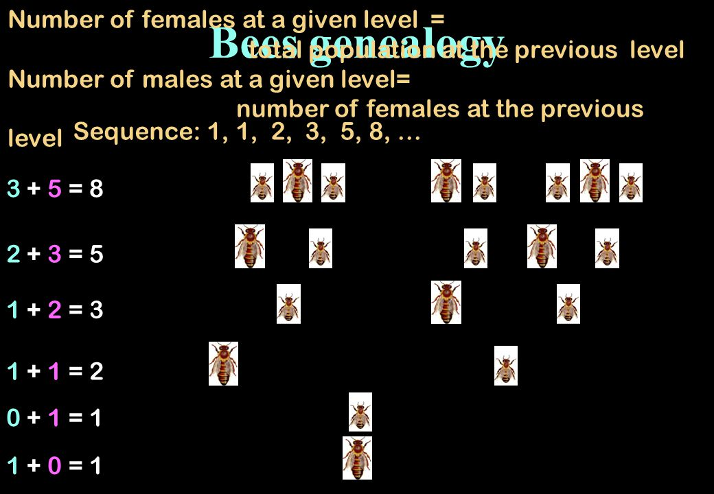 Bees genealogy Number of females at a given level =